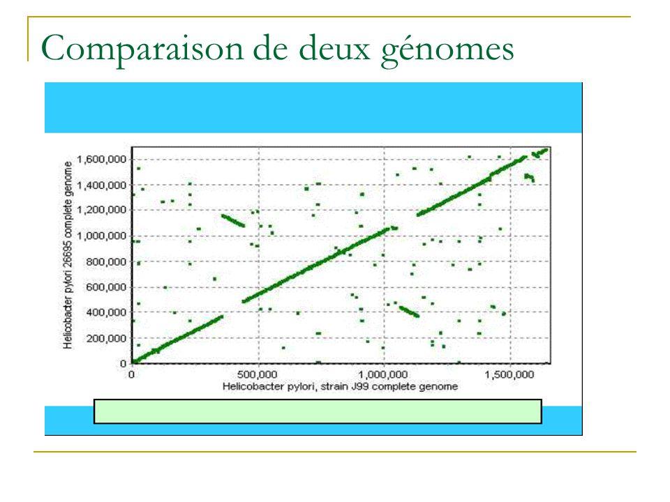 Comparaison de deux génomes