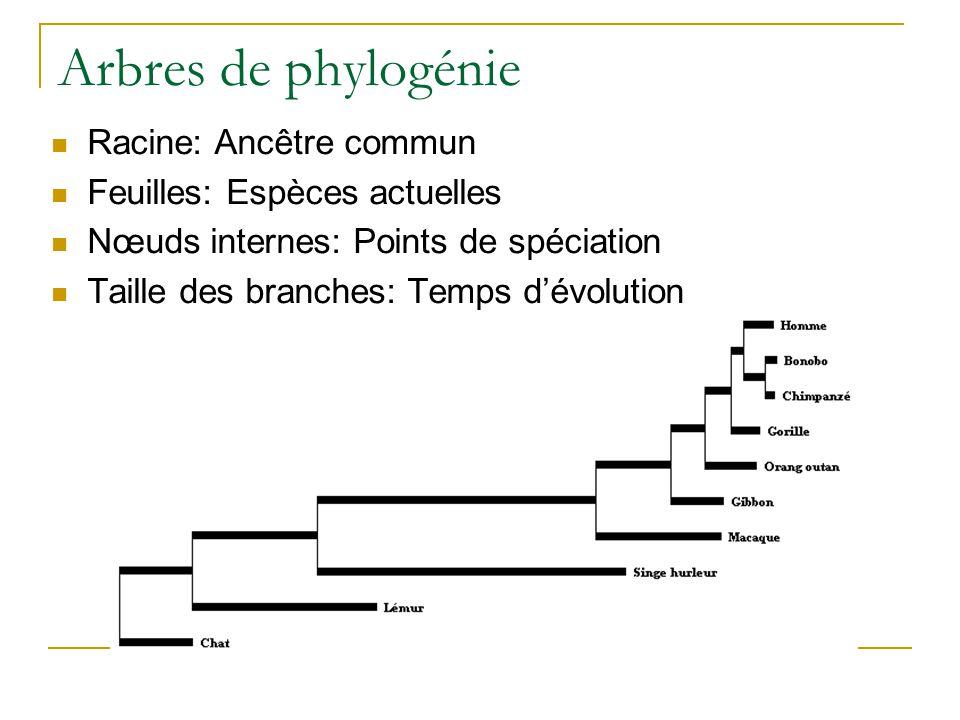 Arbres de phylogénie  Racine: Ancêtre commun  Feuilles: Espèces actuelles  Nœuds internes: Points de spéciation  Taille des branches: Temps d'évol