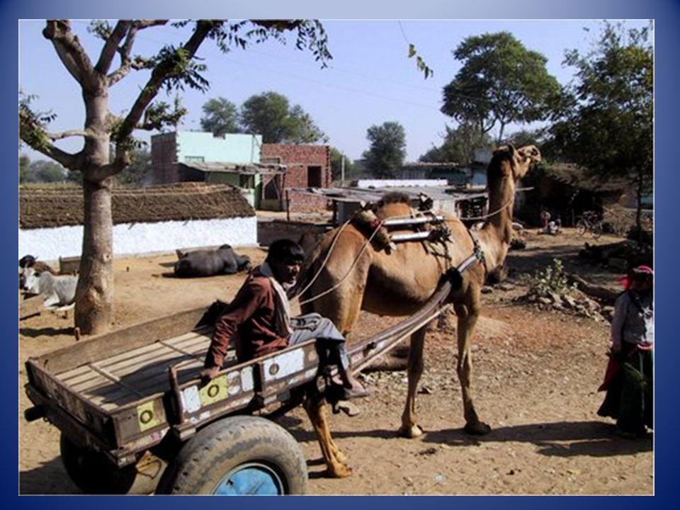 Le Palais des Vents à Jaïpur (Indes)