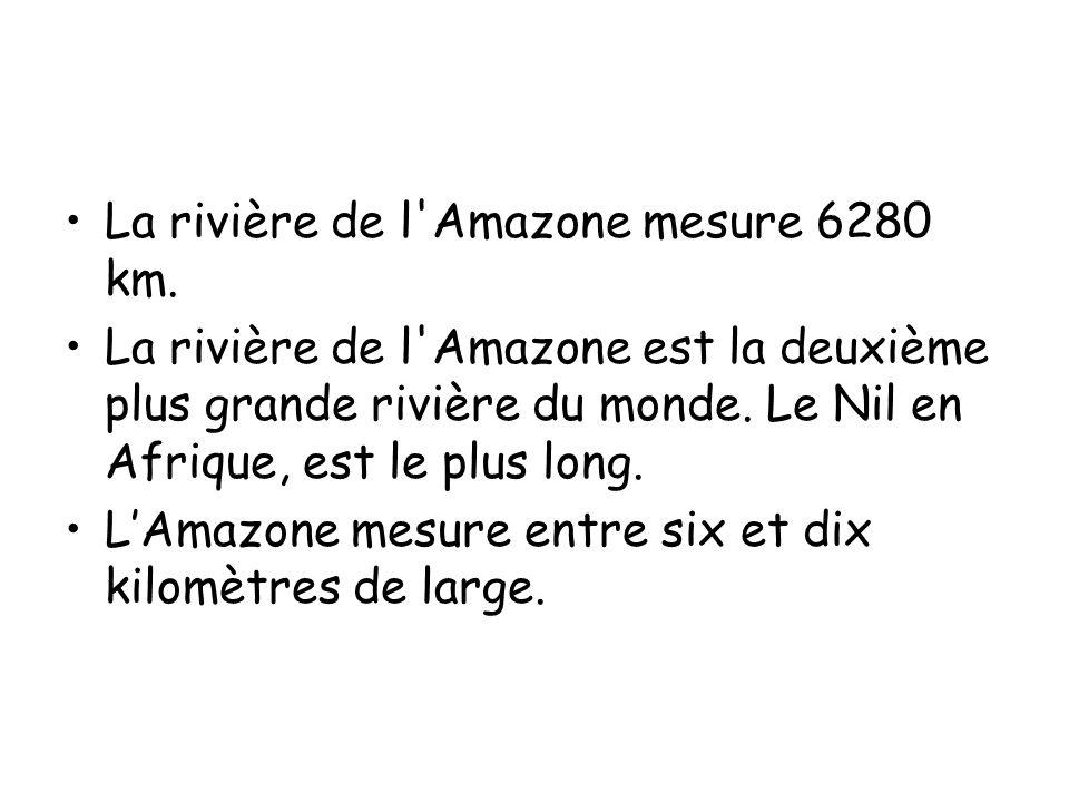 •La rivière de l Amazone mesure 6280 km.
