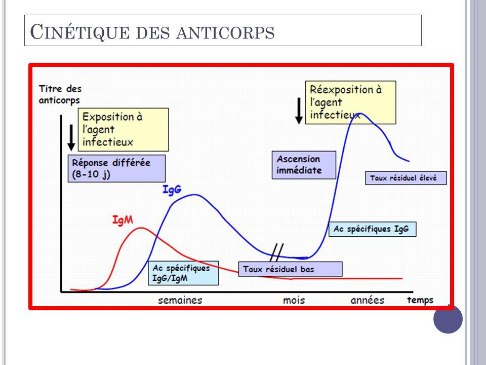 C INÉTIQUE DES ANTICORPS