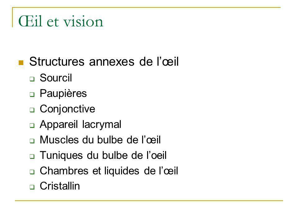 Œil et vision  Structures annexes de l'œil  Sourcil  Paupières  Conjonctive  Appareil lacrymal  Muscles du bulbe de l'œil  Tuniques du bulbe de