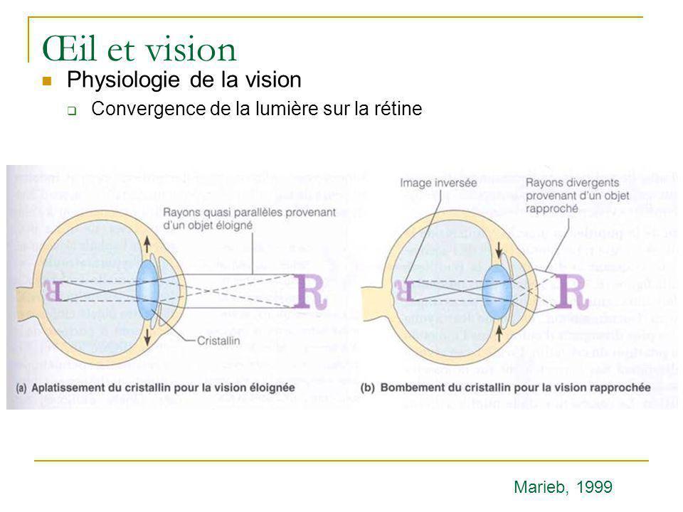 Œil et vision  Physiologie de la vision  Convergence de la lumière sur la rétine Marieb, 1999