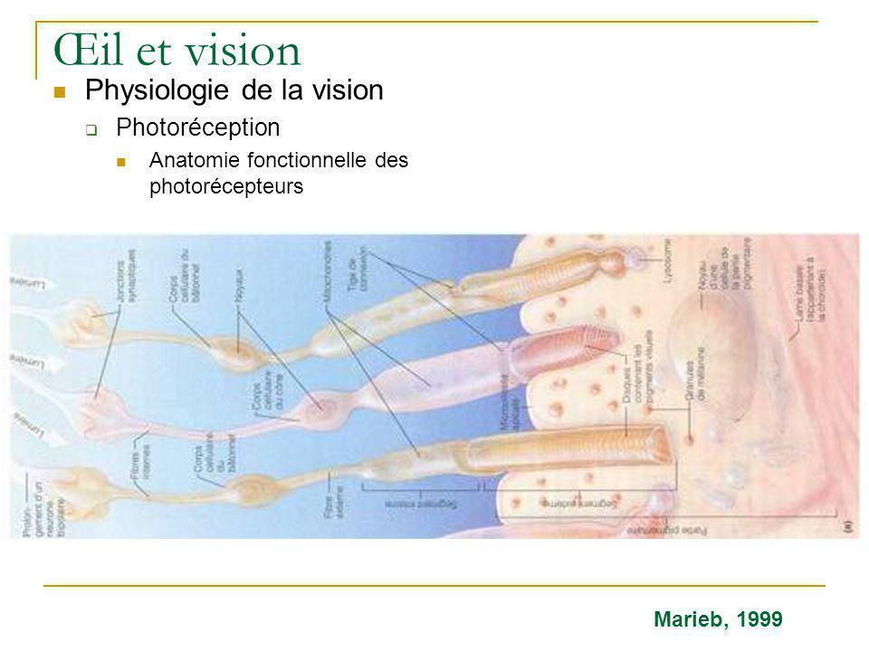 Œil et vision  Physiologie de la vision  Photoréception  Anatomie fonctionnelle des photorécepteurs Marieb, 1999