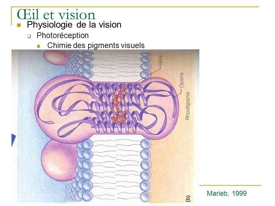 Œil et vision  Physiologie de la vision  Photoréception  Chimie des pigments visuels Marieb, 1999
