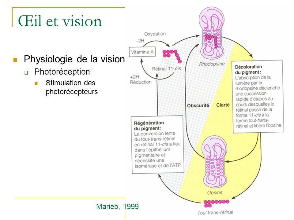 Œil et vision  Physiologie de la vision  Photoréception  Stimulation des photorécepteurs Marieb, 1999