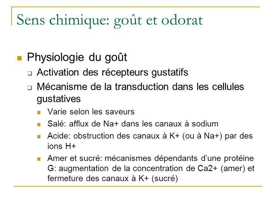 Sens chimique: goût et odorat  Voie gustative •Récepteurs du 2/3 antérieur de la langue : Corde du tympan (Collatérale du nerf facial, crânien VII) •Récepteurs du 1/3 postérieur: rameau lingual (nerf glosso- pharingien, crânien IX) •Récepteur dans l'épiglotte et le pharynx : nerf vague (crânien X) Synapse: noyau solitaire du bulbe rachidien Thalamus Aire gustative