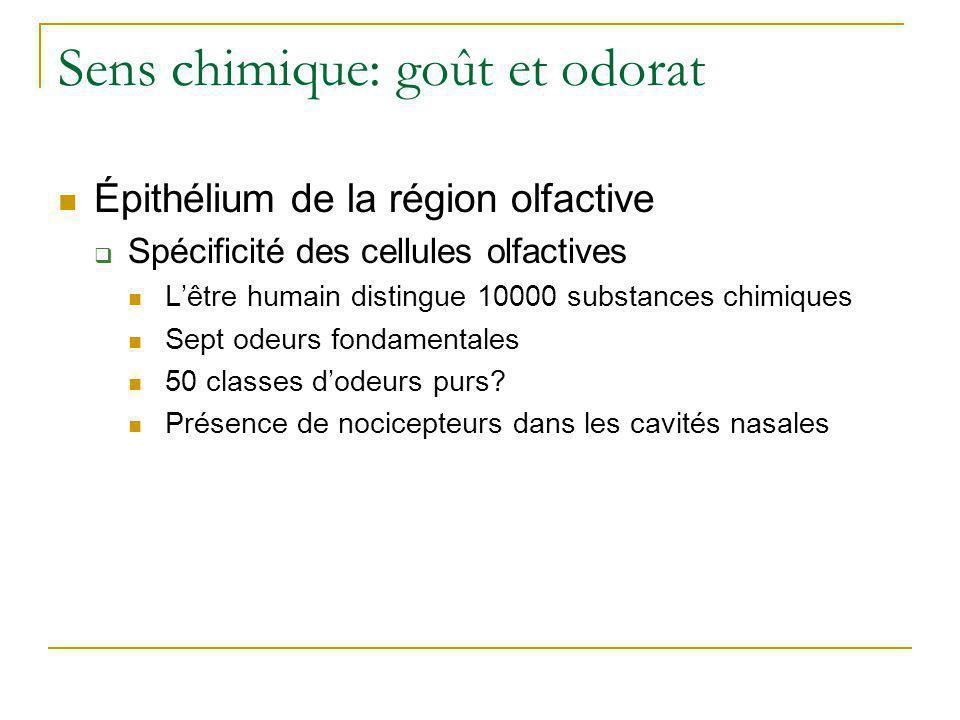 Sens chimique: goût et odorat  Épithélium de la région olfactive  Physiologie de l'odorat Substance volatile et soluble Mucus dissout Protéines réceptrices Ouverture des canaux Na+ Nerf olfactif Si liminaire