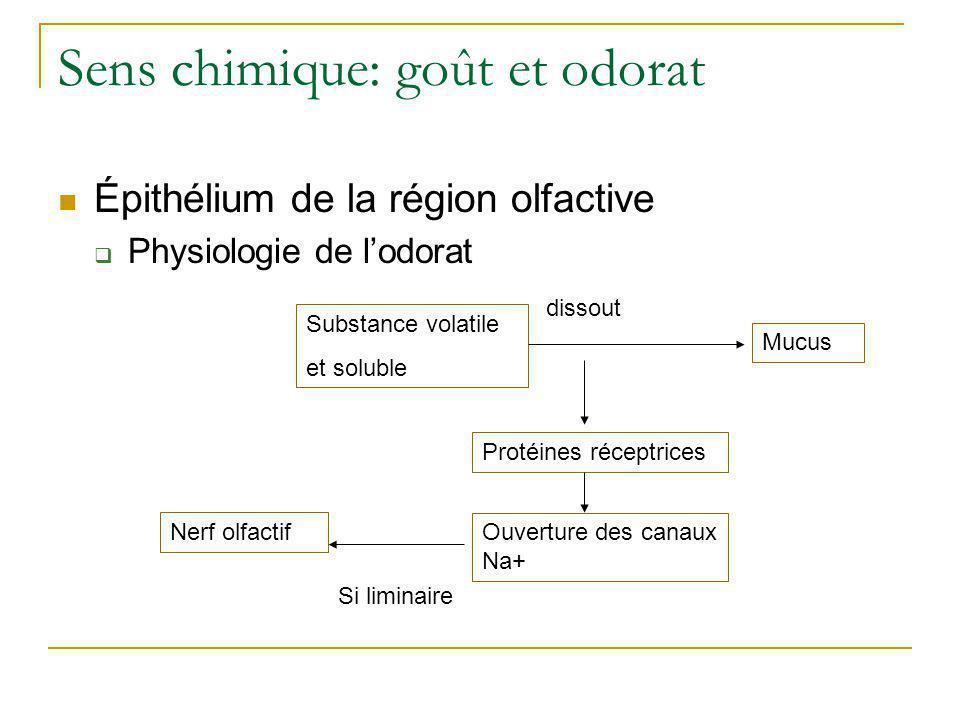 Sens chimique: goût et odorat  Épithélium de la région olfactive  Voie olfactive •Récepteurs olfactifs Synapse: bulbe olfactif Thalamus Aire gustativeRégion sous- corticale Système limbique (hypothalamus) Système nerveux sympathique réflexe