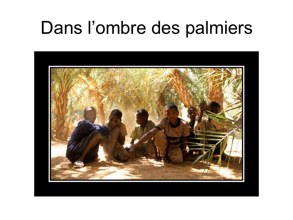 Dans l'ombre des palmiers