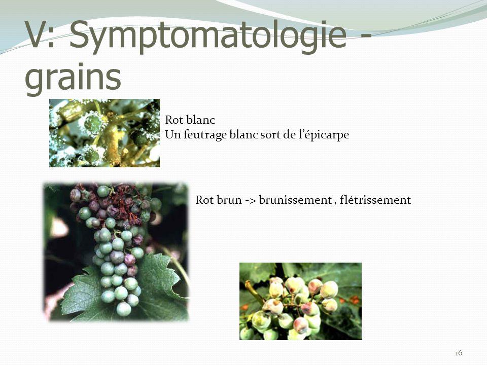 V: Symptomatologie - grains 16 Rot blanc Un feutrage blanc sort de l'épicarpe Rot brun -> brunissement, flétrissement