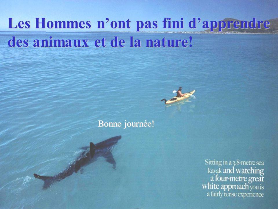 Les Hommes n'ont pas fini d'apprendre des animaux et de la nature des animaux et de la nature! Bonne journée!