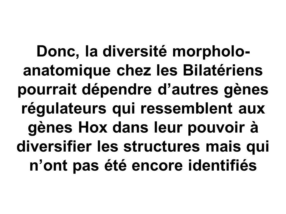 Donc, la diversité morpholo- anatomique chez les Bilatériens pourrait dépendre d'autres gènes régulateurs qui ressemblent aux gènes Hox dans leur pouv