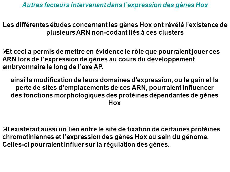 Autres facteurs intervenant dans l'expression des gènes Hox ainsi la modification de leurs domaines d'expression, ou le gain et la perte de sites d'em