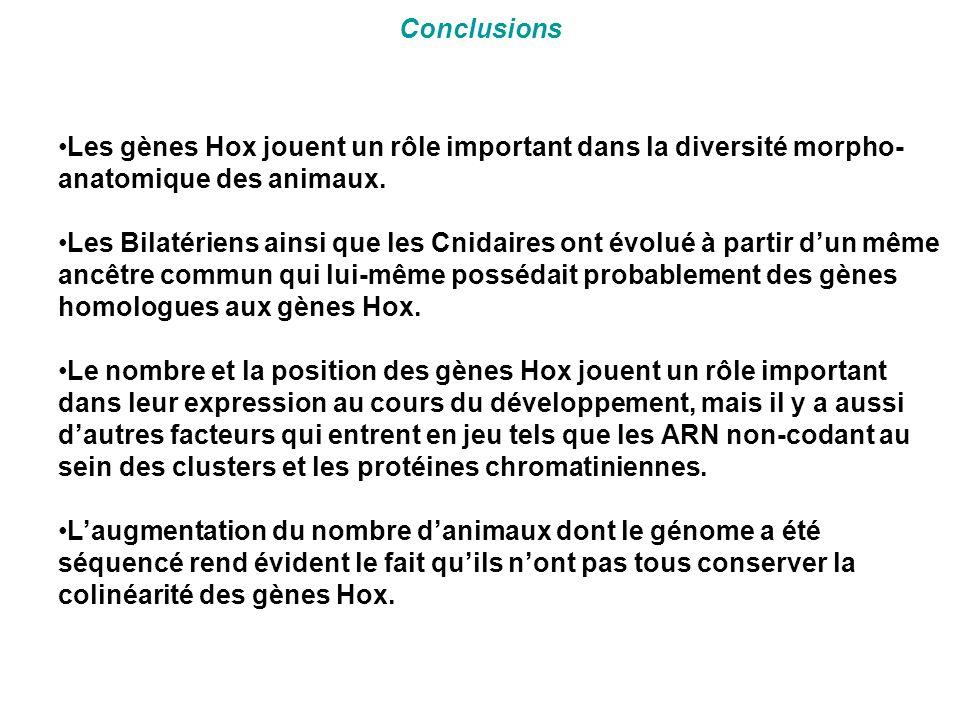 Conclusions •Les gènes Hox jouent un rôle important dans la diversité morpho- anatomique des animaux. •Les Bilatériens ainsi que les Cnidaires ont évo