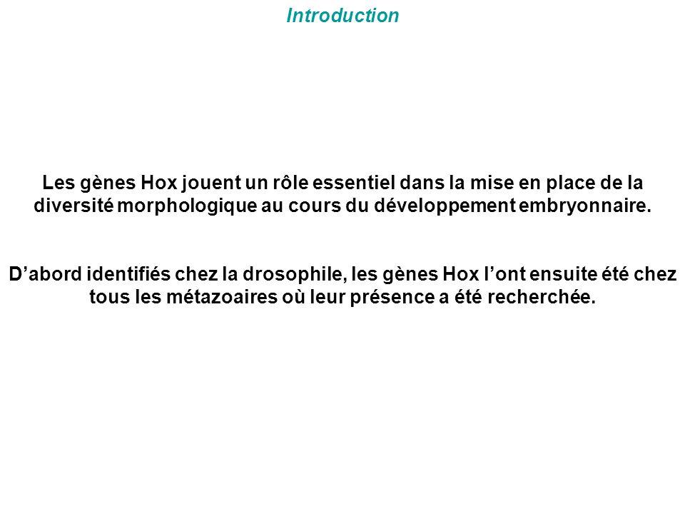 Introduction Les gènes Hox jouent un rôle essentiel dans la mise en place de la diversité morphologique au cours du développement embryonnaire. D'abor