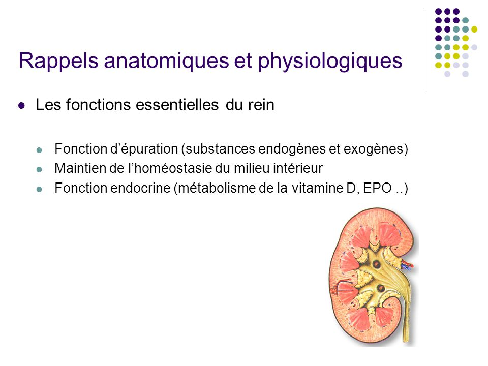 Rappels anatomiques et physiologiques  Les fonctions essentielles du rein  Fonction d'épuration (substances endogènes et exogènes)  Maintien de l'h