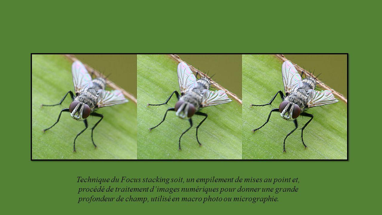 Philippe MARTIN Ecologue, illustrateur, photographe du Sud de la France. Expérimente et développe le procédé Hyper Focus, pratique la macro photo depu