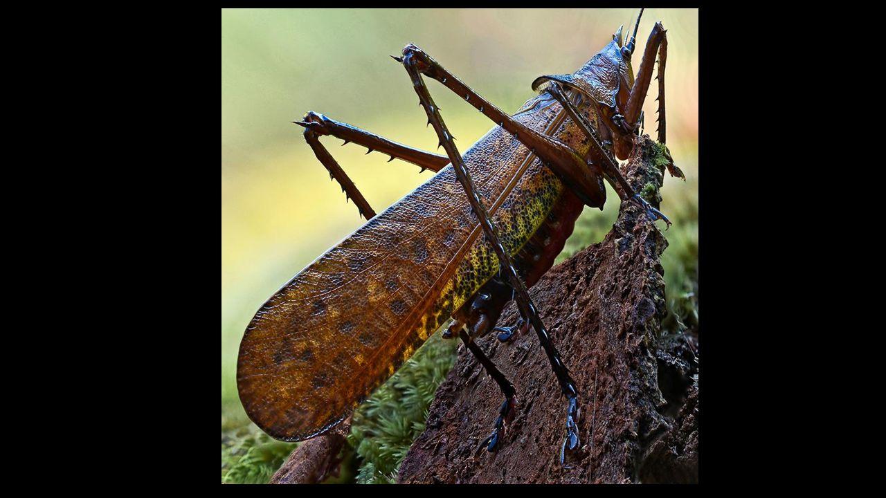 Images de Madagascar réalisées avec un Nikon 9800