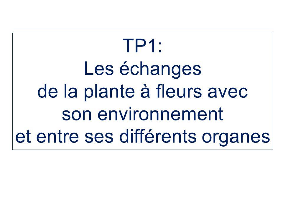 TP1: Les échanges de la plante à fleurs avec son environnement et entre ses différents organes