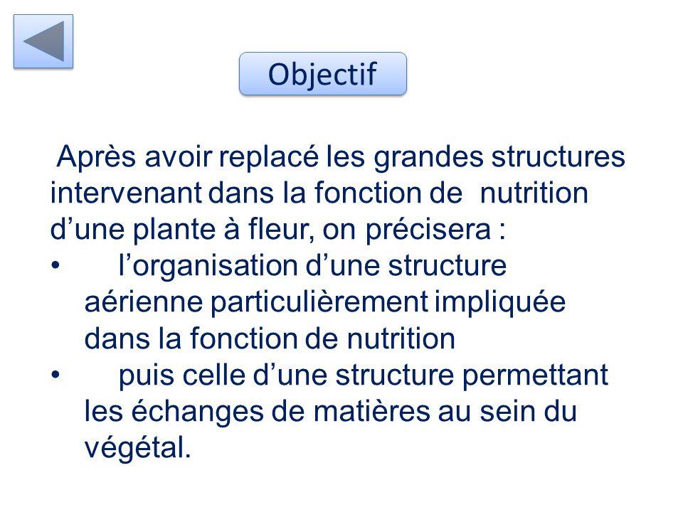 Mise en évidence des structures permettant à la plante à fleurs de se nourrir tout en étant fixée Problématique