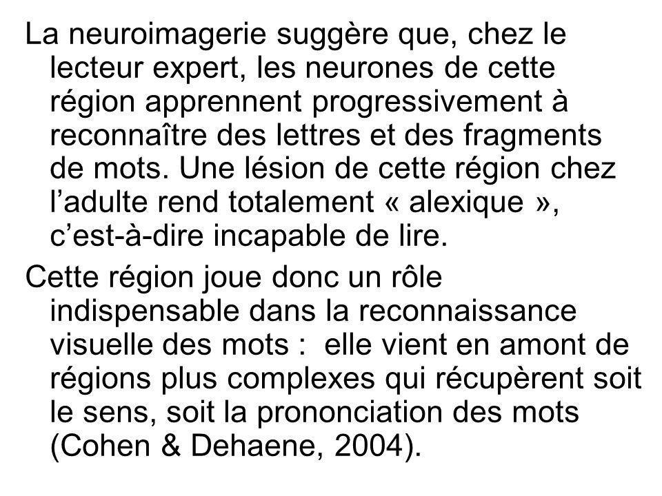 La neuroimagerie suggère que, chez le lecteur expert, les neurones de cette région apprennent progressivement à reconnaître des lettres et des fragmen