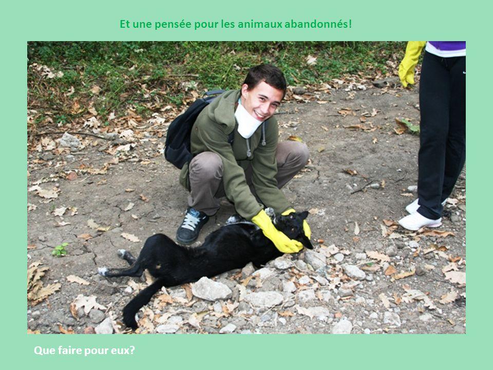 Et une pensée pour les animaux abandonnés! Que faire pour eux?