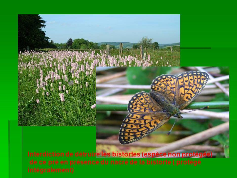 Interdiction de détruire les bistortes (espèce non protégée) de ce pré en présence du nacré de la bistorte ( protégé intégralement)
