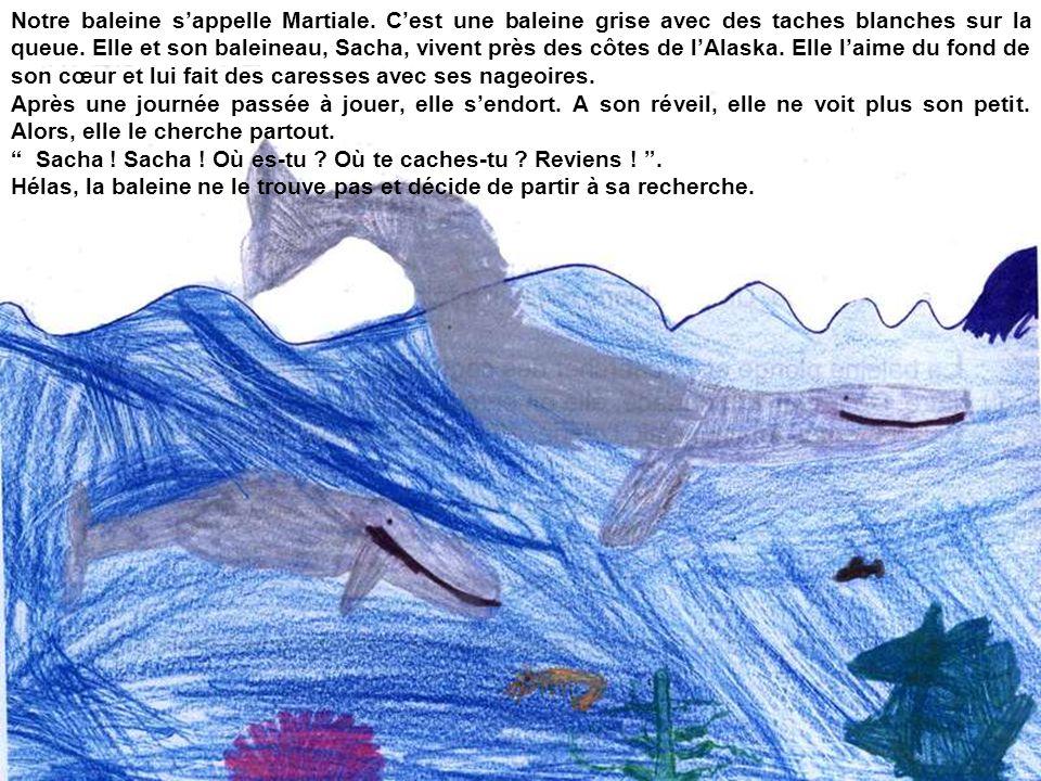 Notre baleine s'appelle Martiale. C'est une baleine grise avec des taches blanches sur la queue. Elle et son baleineau, Sacha, vivent près des côtes d