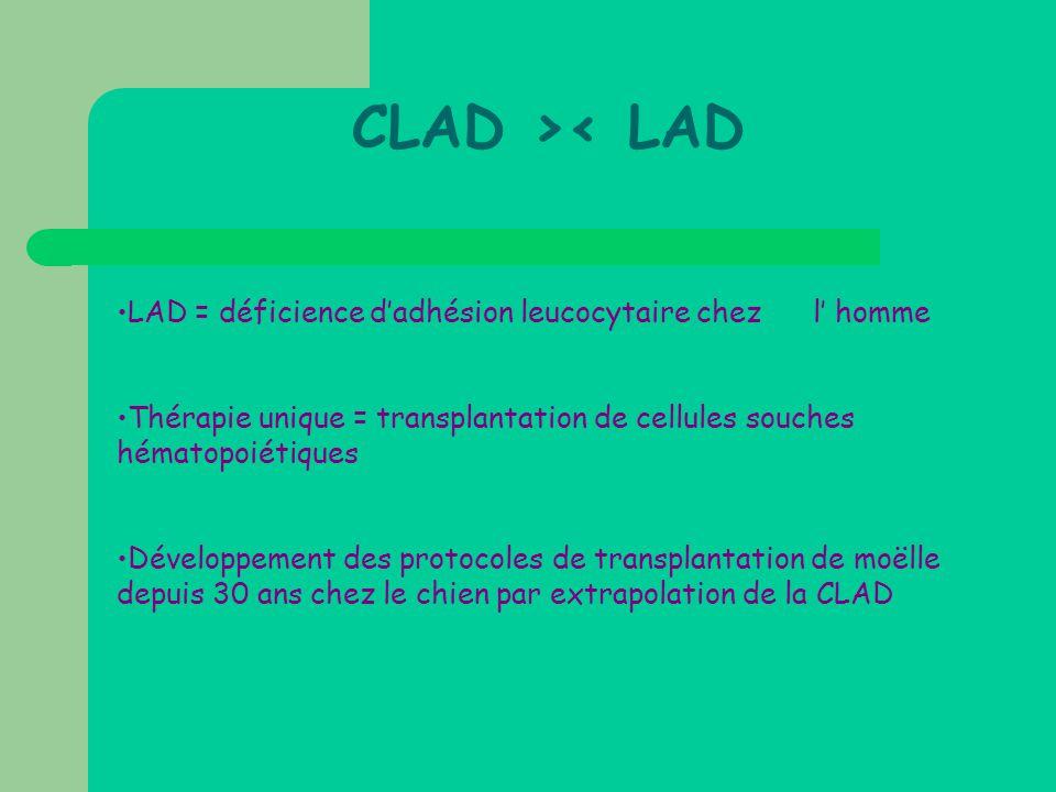 •LAD = déficience d'adhésion leucocytaire chez l' homme •Thérapie unique = transplantation de cellules souches hématopoiétiques •Développement des pro
