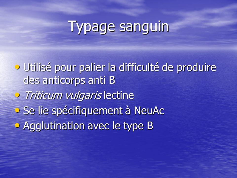 Typage sanguin • Utilisé pour palier la difficulté de produire des anticorps anti B • Triticum vulgaris lectine • Se lie spécifiquement à NeuAc • Agglutination avec le type B