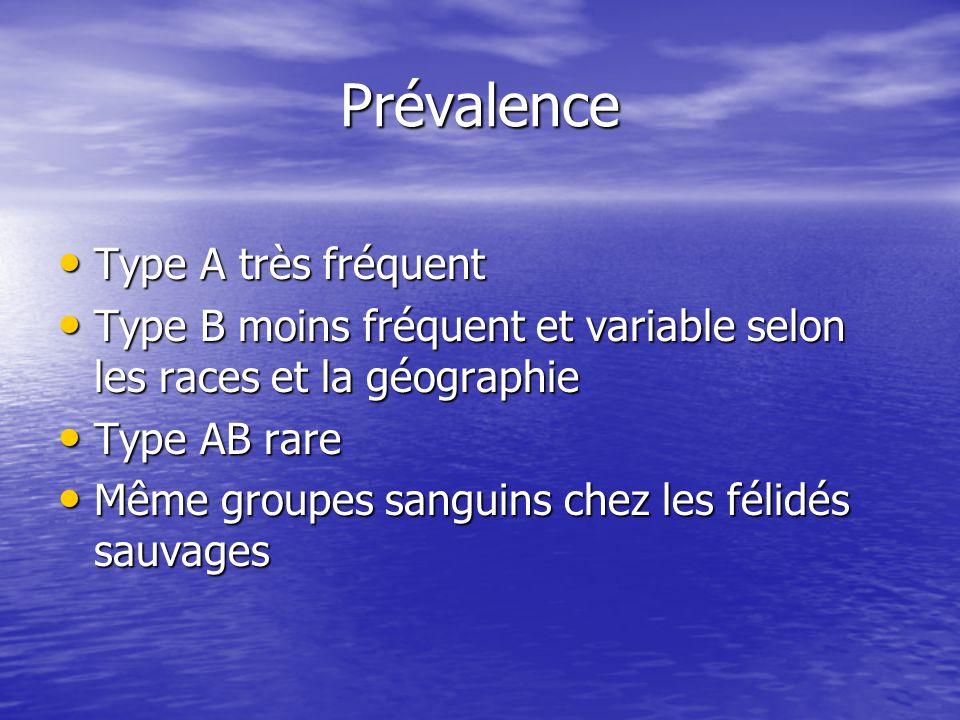 Prévalence • Type A très fréquent • Type B moins fréquent et variable selon les races et la géographie • Type AB rare • Même groupes sanguins chez les félidés sauvages