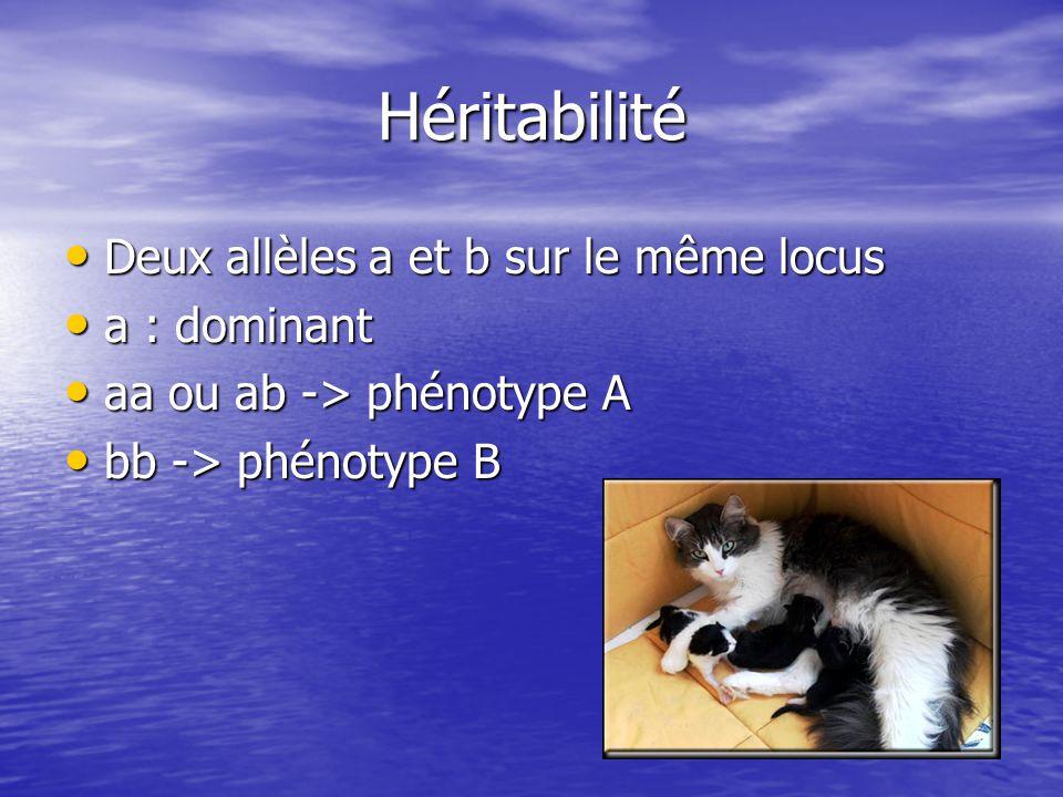 Héritabilité • Deux allèles a et b sur le même locus • a : dominant • aa ou ab -> phénotype A • bb -> phénotype B