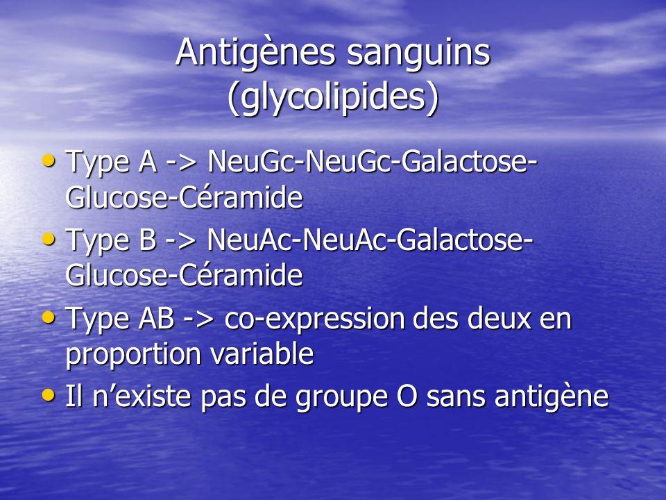Antigènes sanguins (glycolipides) • Type A -> NeuGc-NeuGc-Galactose- Glucose-Céramide • Type B -> NeuAc-NeuAc-Galactose- Glucose-Céramide • Type AB -> co-expression des deux en proportion variable • Il n'existe pas de groupe O sans antigène