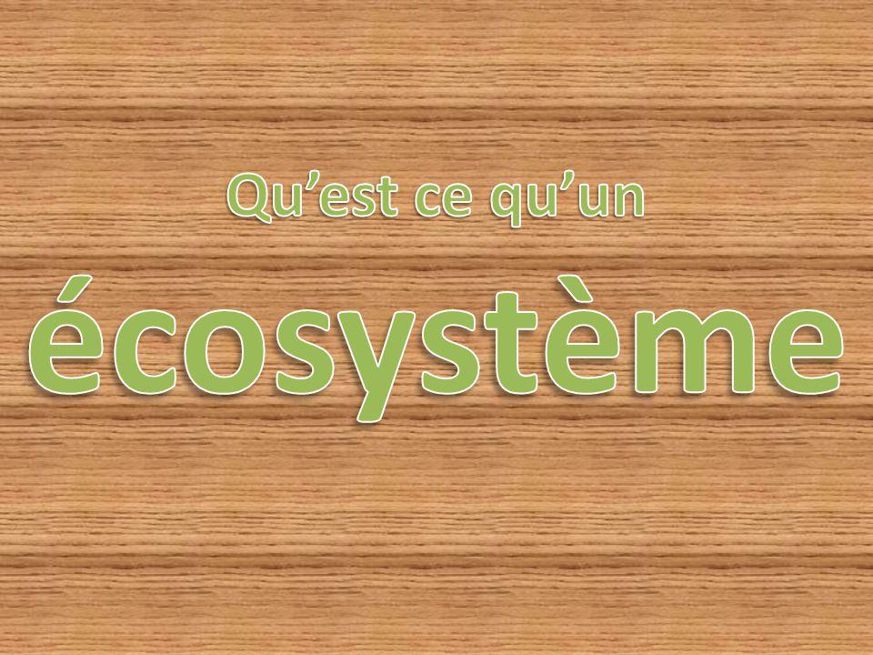 Un écosystème comprend un milieu, les êtres vivants qui le composent et toutes les relations qui peuvent exister et se développer à l intérieur de ce système.