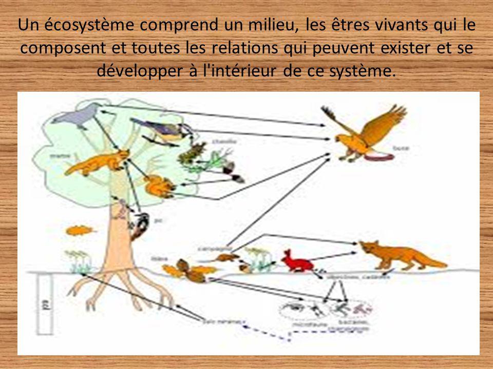 Un écosystème comprend un milieu, les êtres vivants qui le composent et toutes les relations qui peuvent exister et se développer à l'intérieur de ce