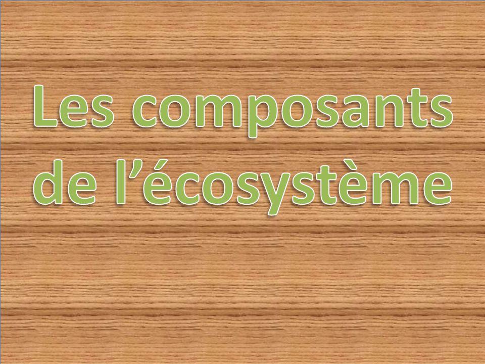 Un écosystème est composé de deux éléments la biocénose qui est l ensemble des êtres vivants et le biotope qui est le milieu