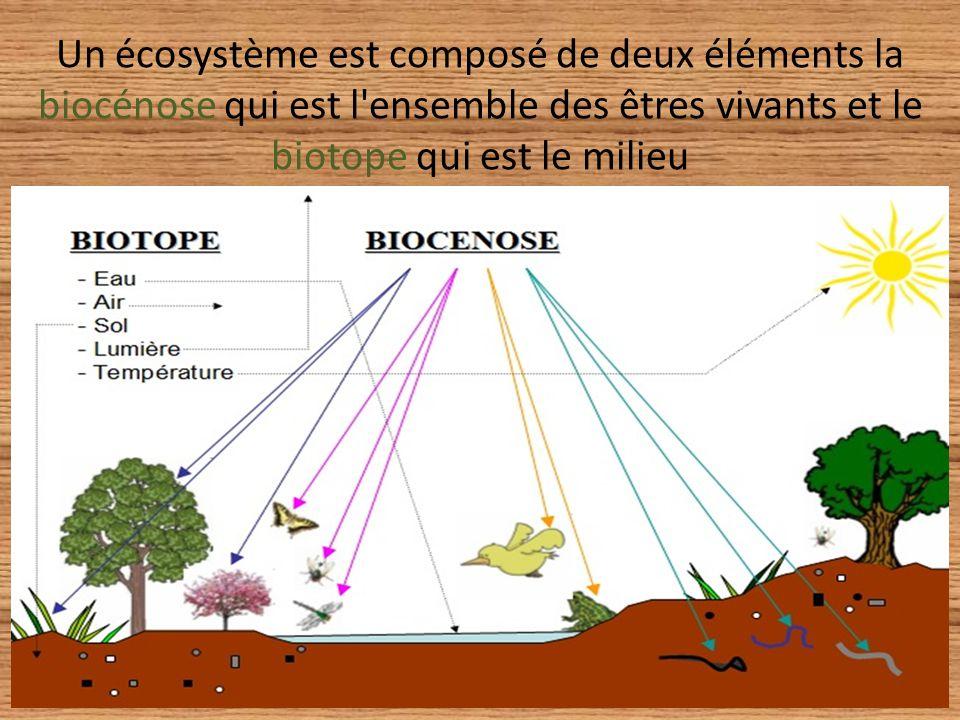 Un écosystème est composé de deux éléments la biocénose qui est l'ensemble des êtres vivants et le biotope qui est le milieu