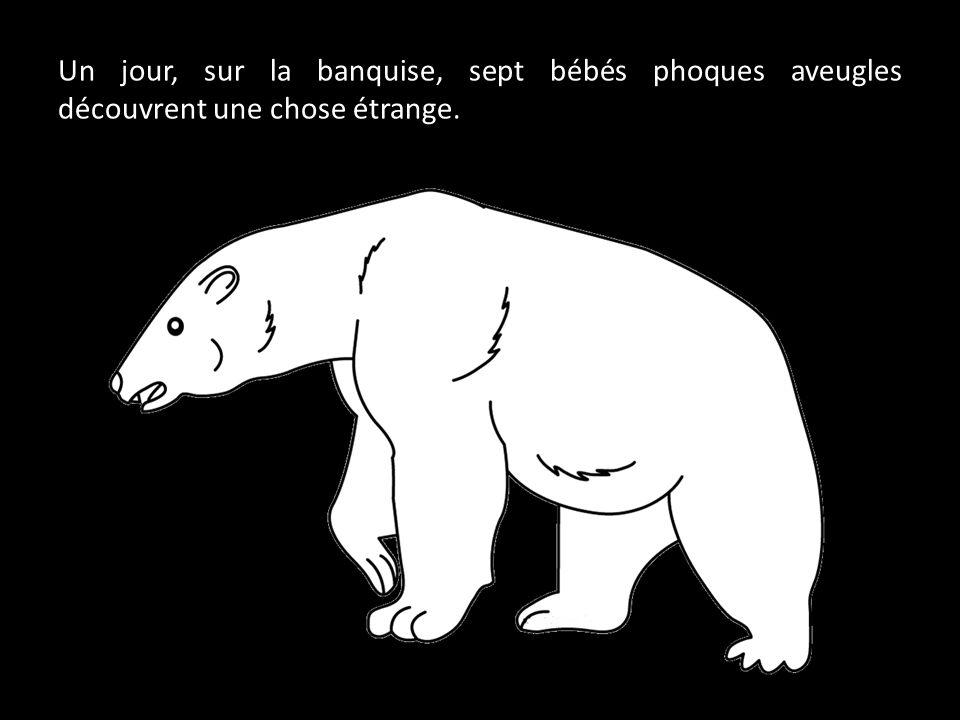 Un jour, sur la banquise, sept bébés phoques aveugles découvrent une chose étrange.