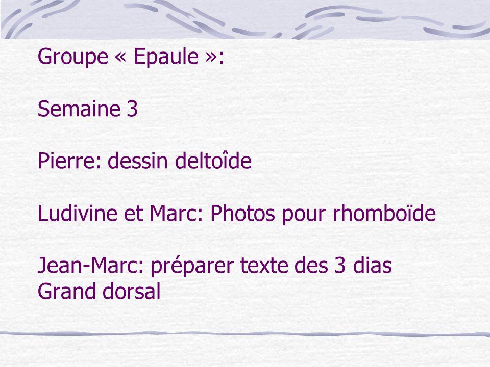 Groupe « Epaule »: Semaine 3 Pierre: dessin deltoîde Ludivine et Marc: Photos pour rhomboïde Jean-Marc: préparer texte des 3 dias Grand dorsal