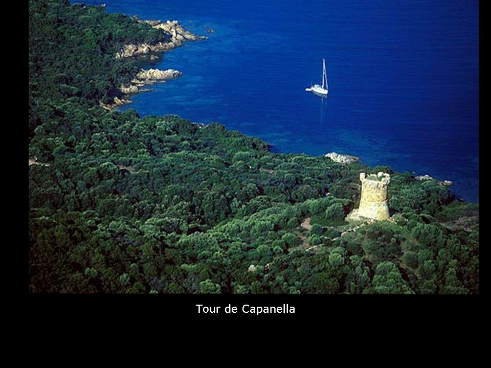 Arbre dans le Capu d'Acciaju au sud de Pallombaggia