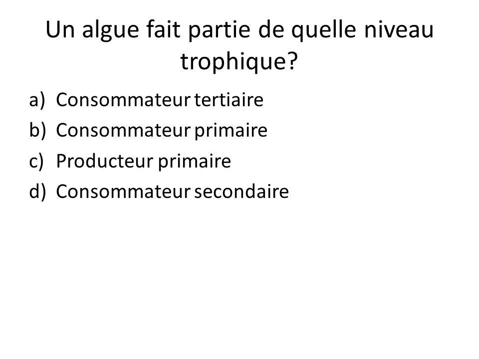 Un algue fait partie de quelle niveau trophique? a)Consommateur tertiaire b)Consommateur primaire c)Producteur primaire d)Consommateur secondaire