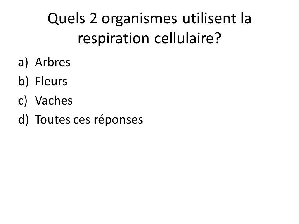 Quels 2 organismes utilisent la respiration cellulaire? a)Arbres b)Fleurs c)Vaches d)Toutes ces réponses