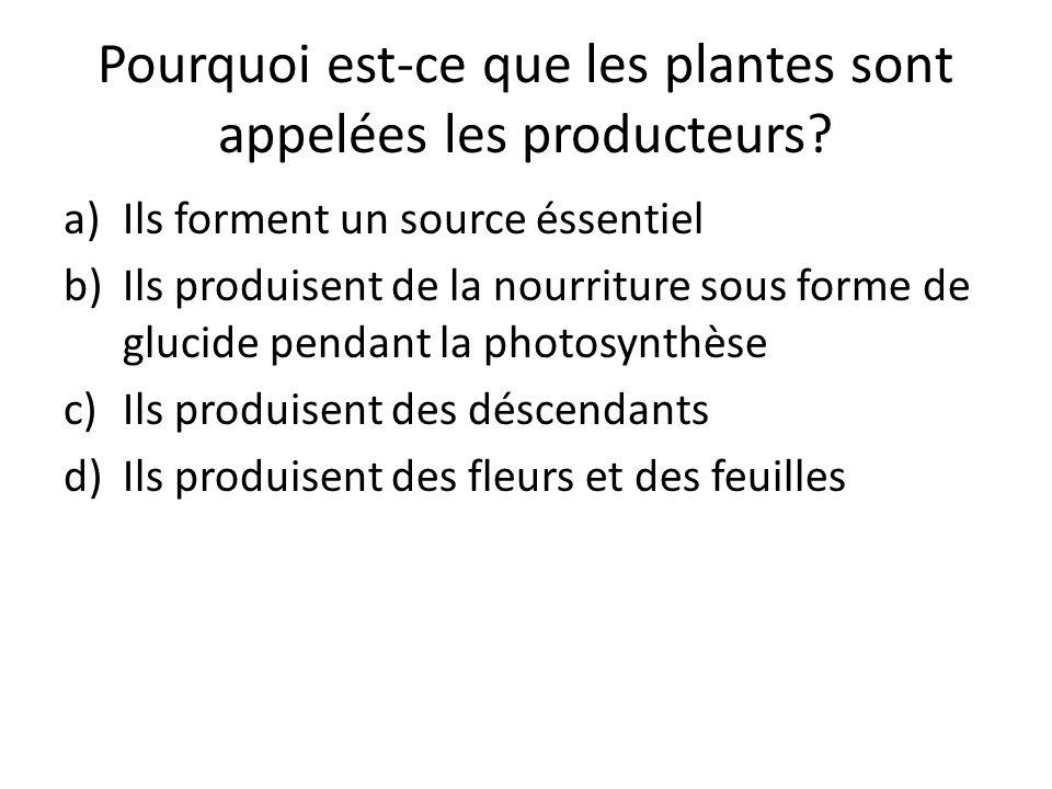 Pourquoi est-ce que les plantes sont appelées les producteurs? a)Ils forment un source éssentiel b)Ils produisent de la nourriture sous forme de gluci
