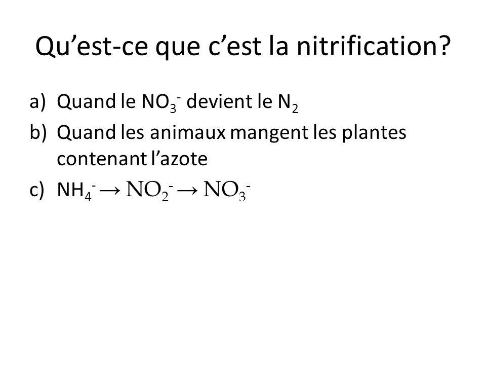 Qu'est-ce que c'est la nitrification? a)Quand le NO 3 - devient le N 2 b)Quand les animaux mangent les plantes contenant l'azote c)NH 4 - → NO 2 - → N