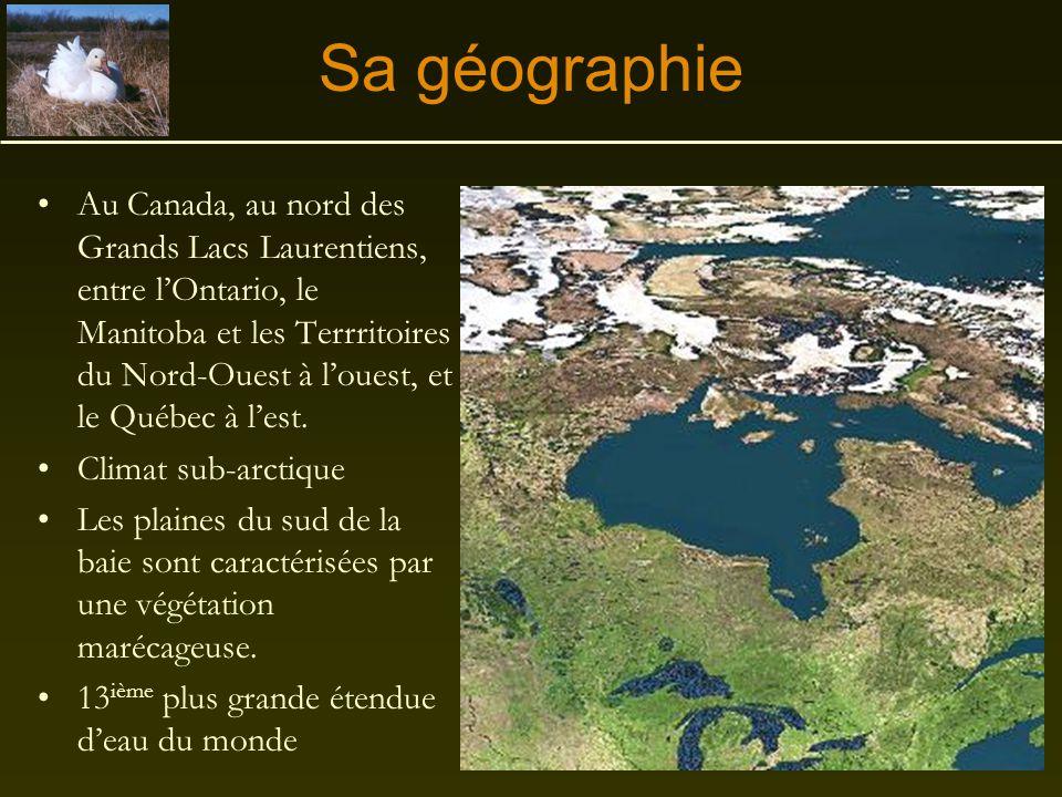 La baie d'Hudson Un exemple de désertification due à une mauvaise gestion de la faune