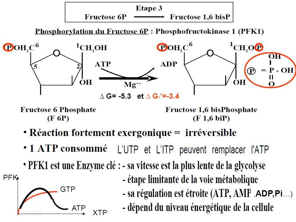∆ G= -5.3 et ∆ G ° '=-3.4, ADP,Pi …) GTP ATP PFK XTP