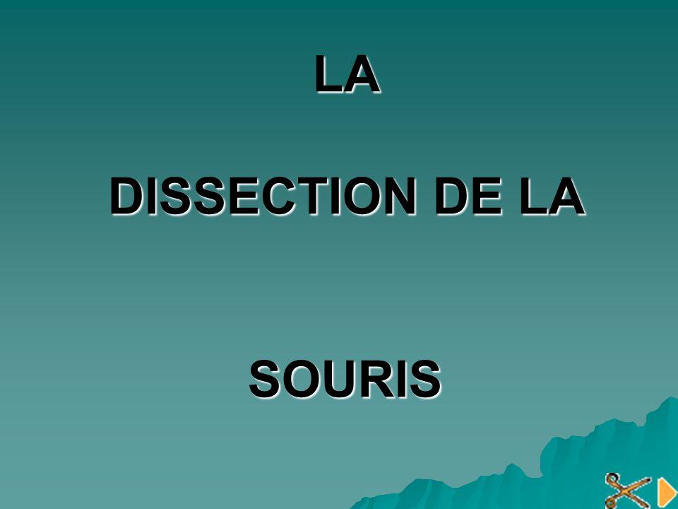 LA DISSECTION DE LA SOURIS