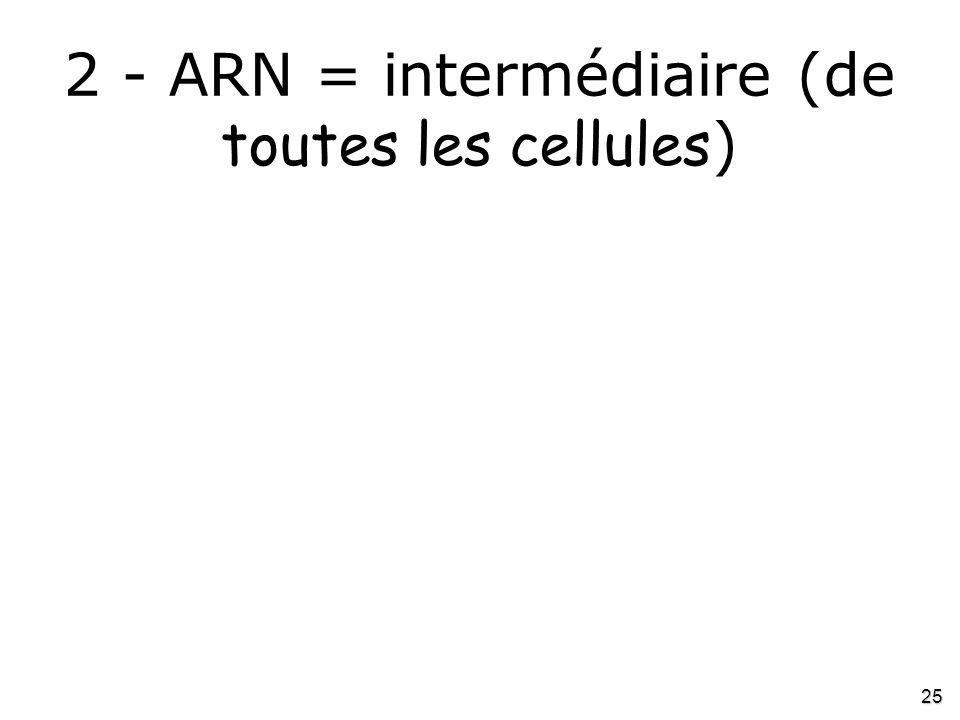 25 2 - ARN = intermédiaire (de toutes les cellules )