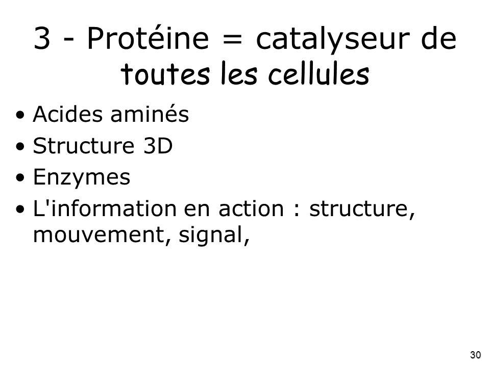 30 3 - Protéine = catalyseur de toutes les cellules •Acides aminés •Structure 3D •Enzymes •L'information en action : structure, mouvement, signal,